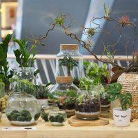 Plantizia spája našu lásku k rastlinám, krásnej prírode a ekológii. Ponúkamej jedinečné kúsky rastlín a dekorácií - riasogule, rastlinné teráriá, tillanadsie, macrame a veľa ďalšieho.